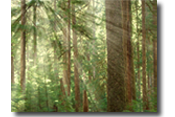 Add light rays through the trees using Photoshop.
